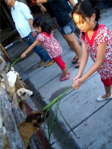 avilon_sheepfeeding