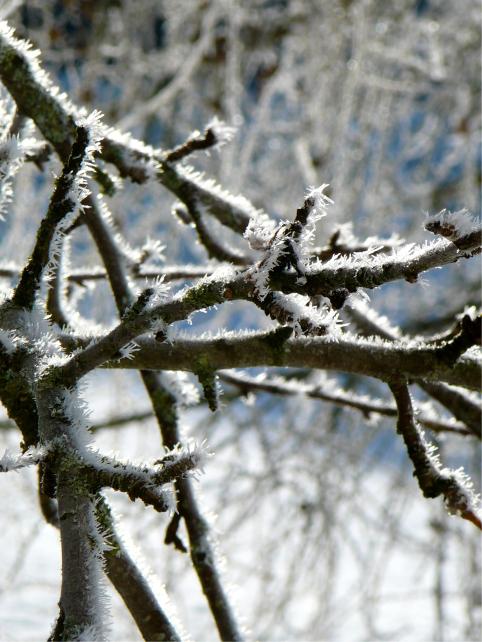 snow_branches_l